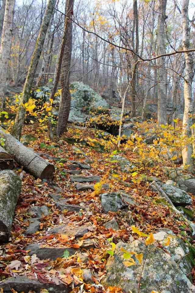 Autumn Weekend in Asheville // pumpkinandpeanutbutter.com