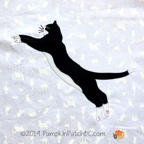 Tuxedo Cat #11 JPG