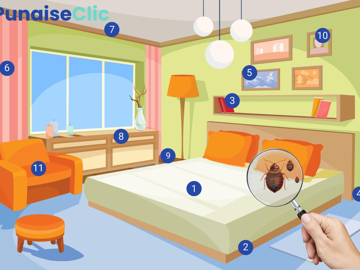 ou trouver les nids de punaises de lit (sommier, matelas, canapés, fauteuils, tables de chevet)