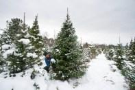 Christmas Tree 2014 - 4