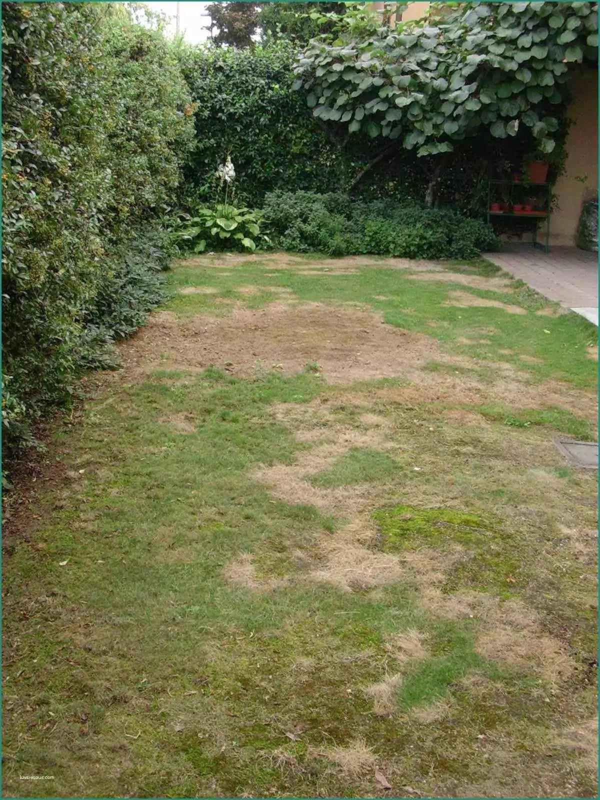 Camminamento Giardino Fai Da Te.Bordure Giardino Fai Da Te Bordura Da Giardino Divisoria Per