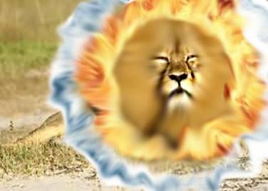 elementy-liony
