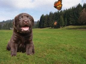 puppyandbutterflya-t