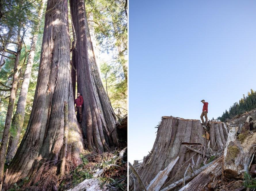 Fotó: TJ Watt: Részlet a Caycuse Before & After Logging című sorozatból © TJ Watt