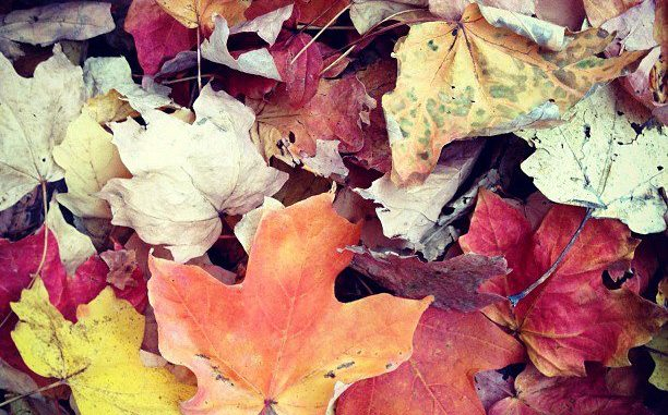 Autumn Music Playlist
