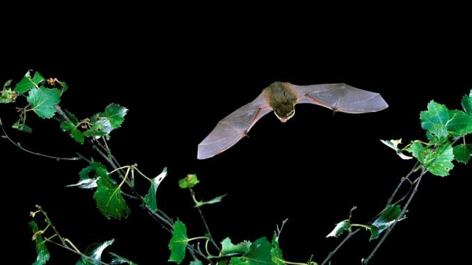 Saving the bats is so important. Female bats are pretty much the original Punky Moms gang. Learn ways you and your family can help with bat conservation.