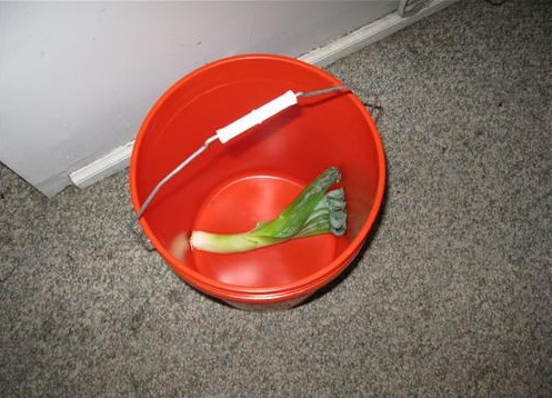 leek bucket, vegetable pun