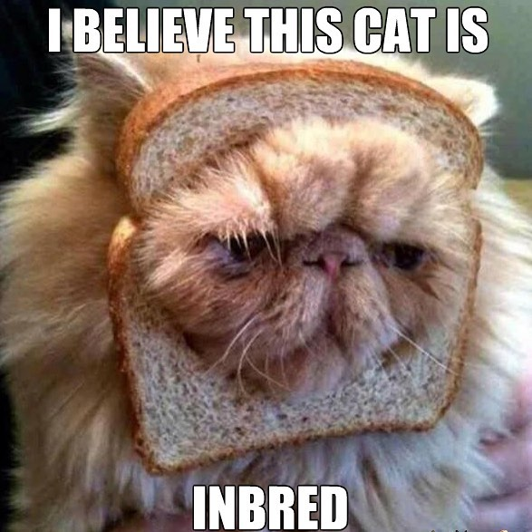 Image result for bad puns purte bread cat