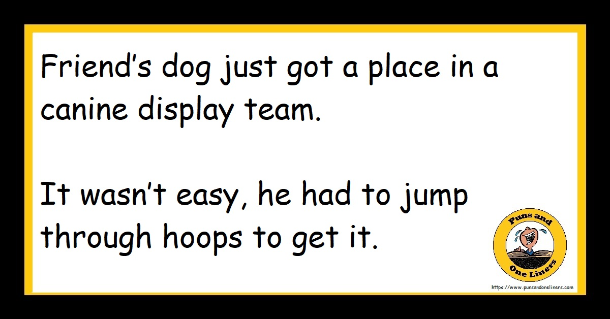 Friend's dog just got a place in a canine display team. It wasn't easy, he had to jump through hoops to get it.
