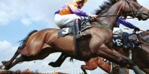 Pedigree Horse Winner Breeding DNA