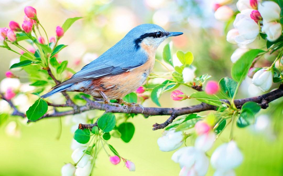 Expandir la abundancia en nuestra vida | Práctica especial