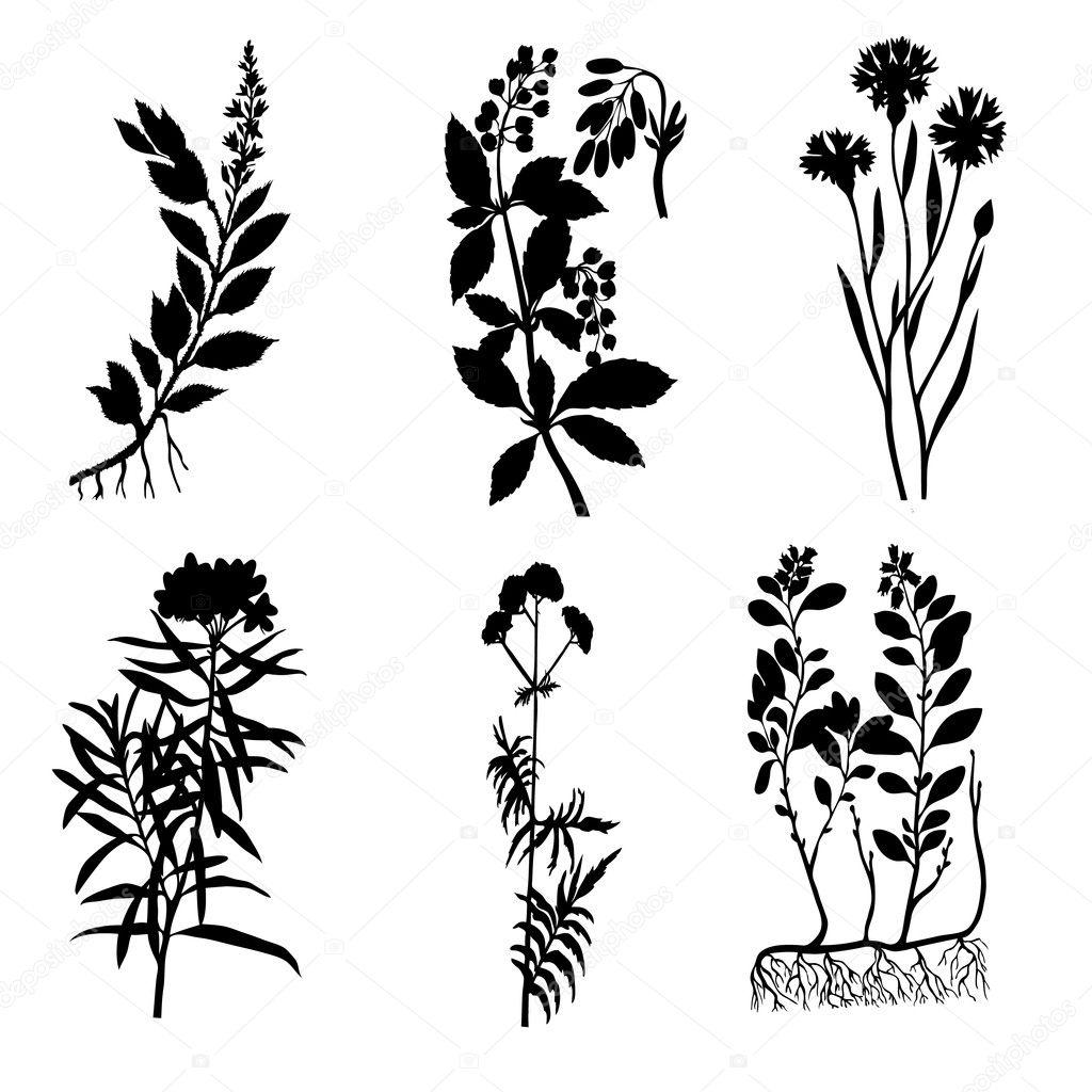 Plants Silhouette