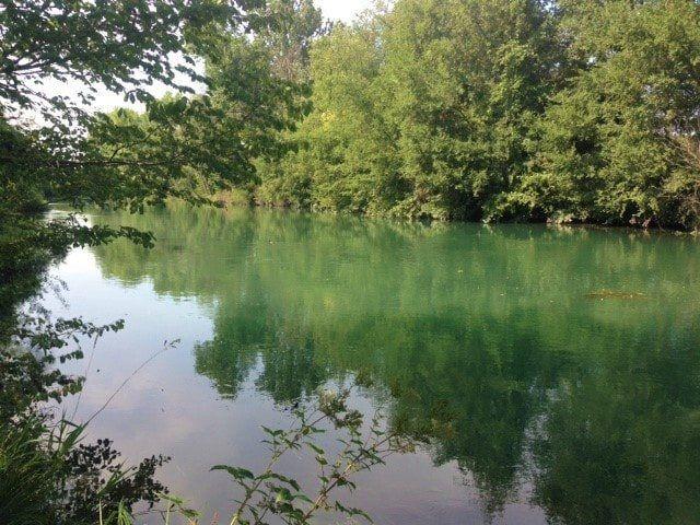 Riflessi di piante sul fiume sile