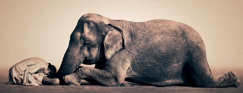 preghiera fra uomo ed elefante