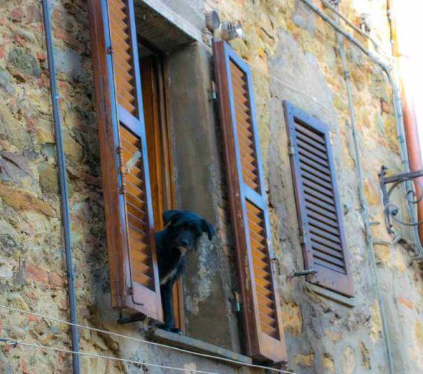 cagnolino che ci osserva da una finestra a ficulle