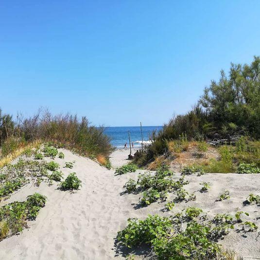 spiaggia sabbiosa di pellestrina