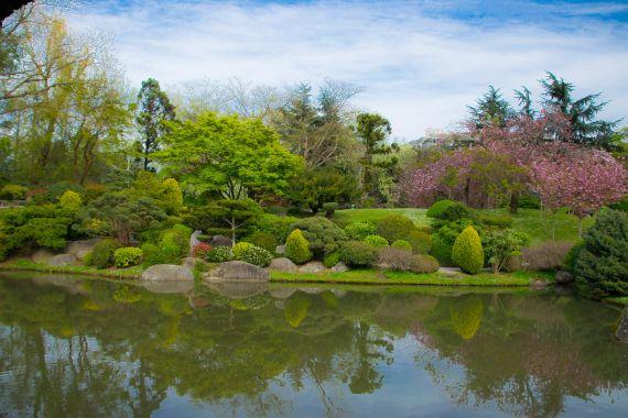particolari di cespugli e piante in armonia nel giardino giapponese con laghetto annesso