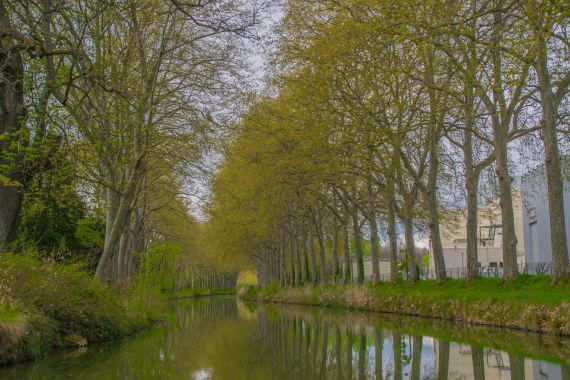 immagine dal canal du midi con i platani di lato durante il mio weekend a tolosa