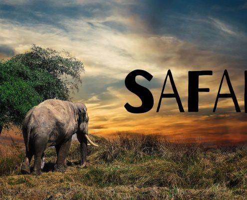 riserve e safari in kenya