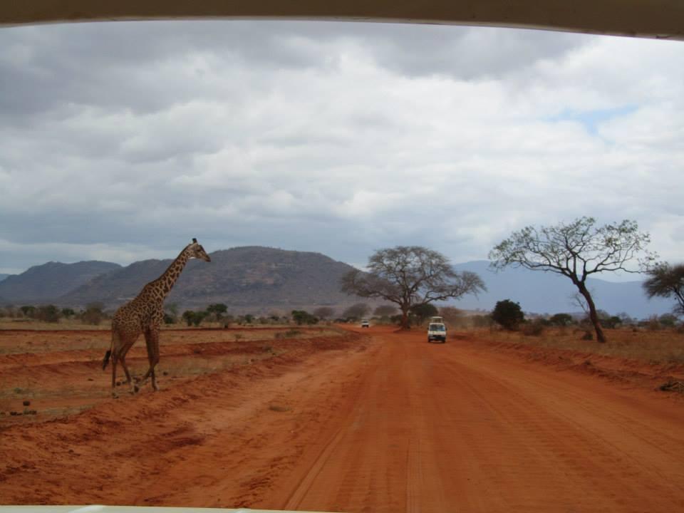 terra rossa africana