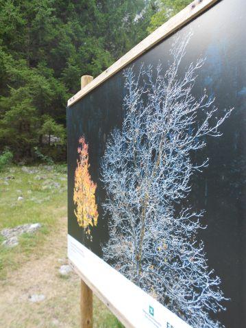 """""""L'anima del bosco. Uomini e foreste in Lombardia"""" - visita fotografica di Punto.Ponte9"""