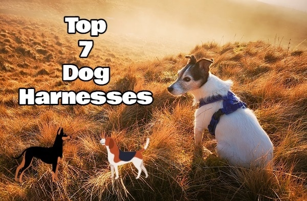 Top 7 Dog Harnesses