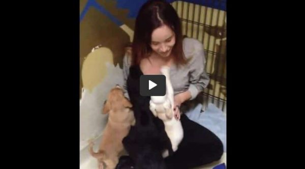 Puppy Reunites With Siblings After 4 Years