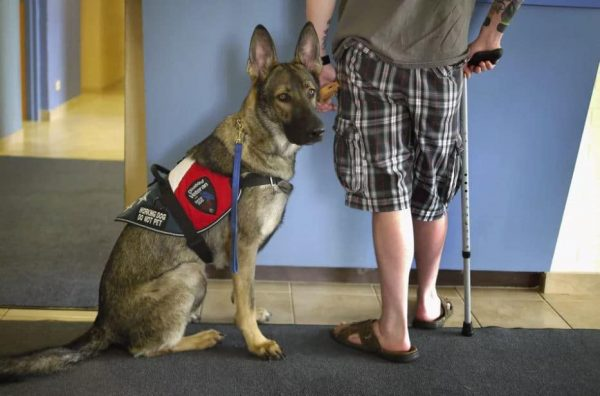 Reasons To Have A Service Dog