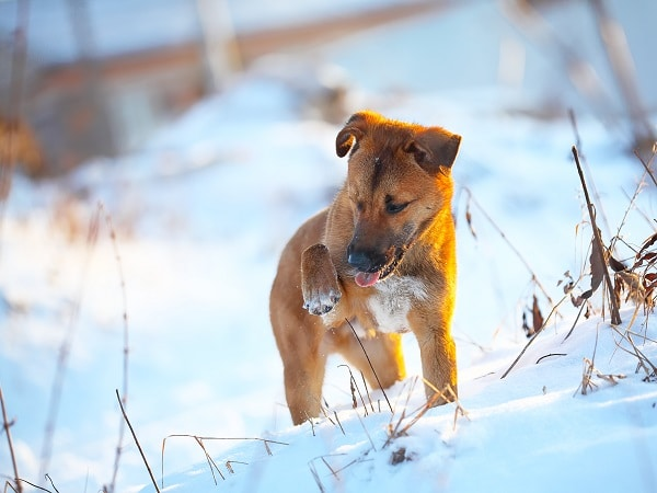 Tips for Taking Care of Your Dog This Winter