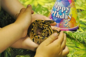 ball-python-life-expectancy