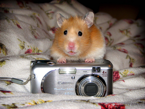 hamster-taking-a-picture-with-camera