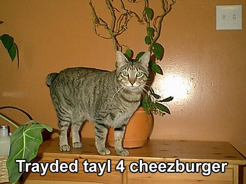 tayl-the-cat