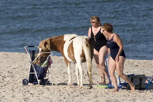 Cute funny horse - I don't need no search warrant, I'm with the Beach Police.