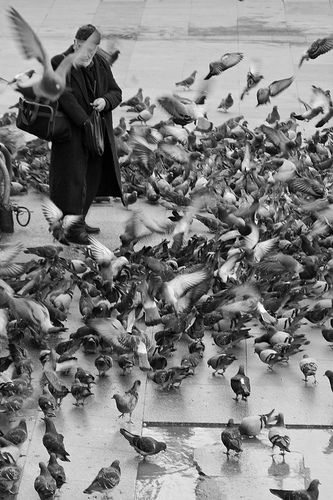 Cute funny pigeons - After returning from a three-week vacation, Victor retreats to his backyard to find 931 homing pigeon messages.