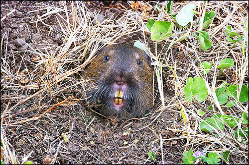 Funny Animal Pictures Gopher Underground