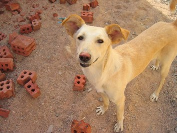 Dog photo by flickr.com/photos/tzofia