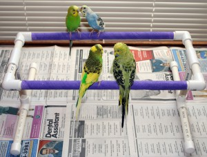 Small Bird Double Perch Stand