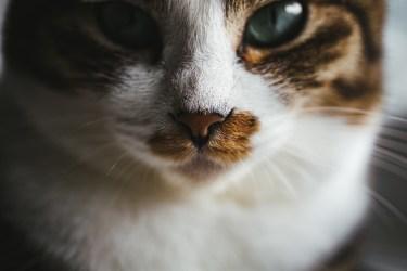 猫が頻繁に暴れる時のしつけのコツやポイントについて