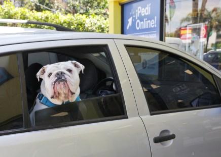 Viajes con Mascotas