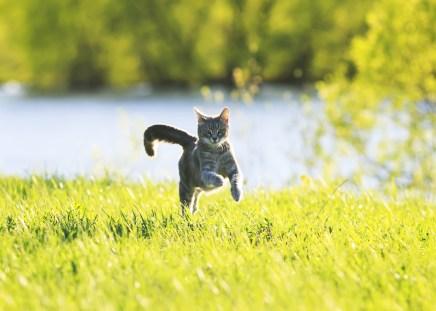 ¿Por qué caza nuestro gato para nosotros?
