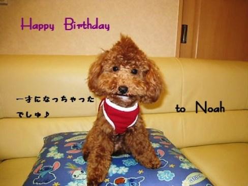 4月10日で一歳になりました ノアが来てからとっても日にちが経つのが早く感じられます。 特に何事もなく元気に過ごしてくれて 先住犬のチョコとも仲良く過ごしてくれているし飼い主としてはほんとに良い子にめぐり合わせてくれてとっても感謝しています。
