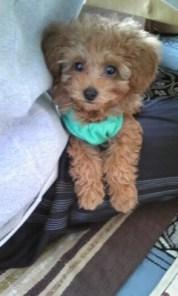 Cocoおねえちゃんとすっかり仲良くなって、毎日元気に飛び跳ねて遊んでいます。 みんなに、かわいいお顔ねとよく言われて我が家の自慢のぼくちゃんになっています!