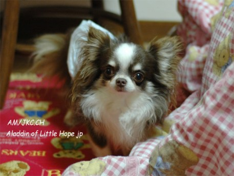 little-hope_00000_00467_gallery