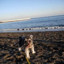 お正月はプチ遠足で羽田空港近くの海浜公園に行きました♪ ポカポカ陽気でたくさんのわんちゃんが遊びに来ていました。 今日は浜辺でひと遊びしたポルトをパチリ。