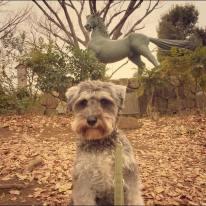 大田区の洗足池公園でパチリ。 この像は、源頼朝のゆかりの「名馬池月」。ポルトは臆さずに寄ってくる鳥や池の鯉に夢中でした(o^^o)