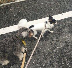わんちゃんがいればもっと楽しいのになぁ、ということで今日のパチリはオレオくん&ポルトのお散歩にします(*^-^*)