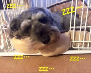 今日はよく寝ているポルトをパチリ。 わんちゃんがおうちでずっと動いて気が休まらない!寝るの⁉︎という飼い主さん、おさんぽを長くするだけでも変化があります(o^^o)