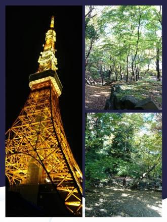 昨日のイベント会場から見える東京タワーと近くの公園をパチリ。 わたしはわんちゃんと自然を楽しめる公園が大好きで、公園を見つけるとウキウキしてしまいます。 そして、犬NGにならないよう、飼っていない方への配慮(^-^)とか、どうすれば犬OKになるかな・・・( ̄ー+ ̄)とかついつい考えてしまいます。 犬ばかかな、それとも職業病でしょうか(*^^*) それとも・・・お節介?じゃないといいな(´∀`;)