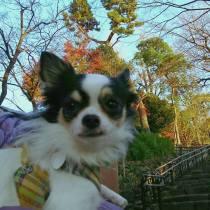 オレオくんと少しだけ残った紅葉散歩でパチリ。 今日は風が強かったので、ちょっぴり緊張気味です。