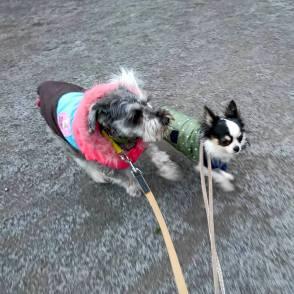 寒さに負けず、タッタカタッタッタ~なオレオくん&ポルトをパチリ。 みんなで歩くと3、4キロはあっという間です(o^-^o